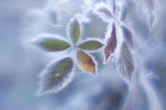 Fogli glassati Fotografie Stock