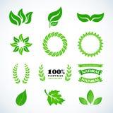 Fogli isolati di verde Foglie dorate dell'alloro messe Progettazione fissata per l'emblema, logotype Logotype d'annata, icone For Fotografia Stock
