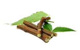 Fogli medicinali del neem Fotografia Stock