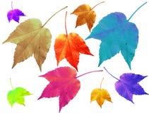 Fogli multicolori Fotografie Stock