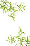 Fogli nani del bambù isolati su bianco Immagine Stock