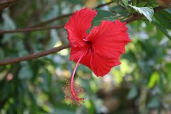 Fogli rossi di verde e del fiore Immagini Stock