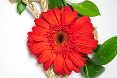 Fogli rossi di verde e del fiore fotografie stock libere da diritti