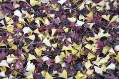 Fogli rossi e gialli Fotografia Stock