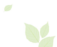 Fogli semplici verdi Immagine Stock Libera da Diritti