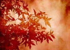 Fogli strutturati dello sweetgum in autunno Immagini Stock Libere da Diritti