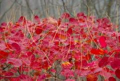 Fogli strutturati di colore rosso. Fotografie Stock Libere da Diritti