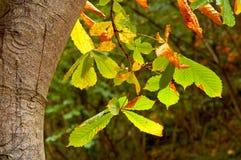 Fogli su un albero Fotografia Stock