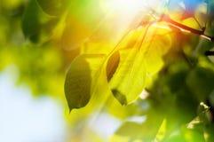 Fogli su un albero Fotografia Stock Libera da Diritti