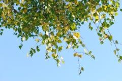Fogli sul cielo blu Fotografie Stock
