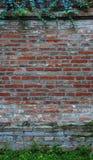 Fogli sul muro di mattoni del grunge Immagini Stock