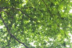 Fogli sull'albero Fotografia Stock Libera da Diritti