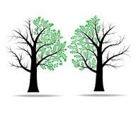Fogli sull'albero Fotografia Stock