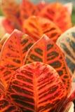 Fogli tropicali fotografie stock