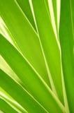 Fogli tropicali immagine stock