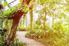 Fogli tropicali Piante esotiche Fondo verde Particolari della natura fotografie stock