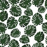 Fogli tropicali Vettore Modello senza cuciture in campione Carta da parati di Monstera Struttura esotica con la foglia del hawaia Fotografia Stock Libera da Diritti