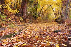 Fogli variopinti degli alberi di caduta e base di insenatura Fotografia Stock