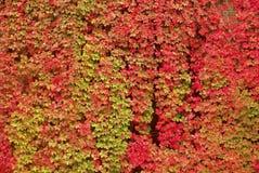 fogli variopinti di autunno Fotografia Stock