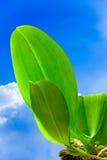 Fogli verde intenso su cielo blu immagini stock libere da diritti