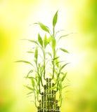 Fogli verdi del bambù fotografia stock