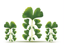 Fogli verdi dell'albero Immagini Stock Libere da Diritti