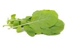 Fogli verdi dell'insalata di Rocket Fotografia Stock Libera da Diritti