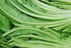 Fogli verdi della verdura Immagini Stock