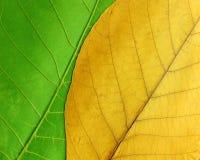 Fogli verdi e gialli Fotografie Stock