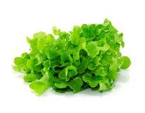 Fogli verdi freschi della lattuga isolati su bianco Fotografie Stock