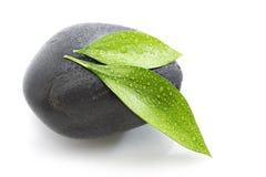 Fogli verdi sulla pietra nera Fotografia Stock