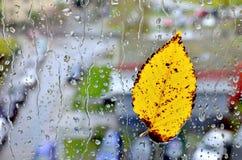 Foglia alla finestra durante la pioggia fotografia stock libera da diritti