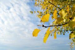 Foglia arancio con il cielo Fotografie Stock Libere da Diritti