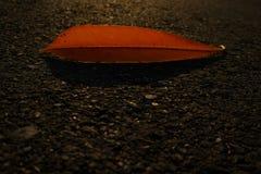 Foglia arancio e la sua ombra Immagine Stock Libera da Diritti