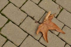 Foglia arrugginita di autunno su una strada del mattone Immagine Stock