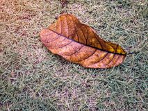 Foglia asciutta con goccia di acqua dalla pioggia sull'iarda verde Fotografie Stock Libere da Diritti