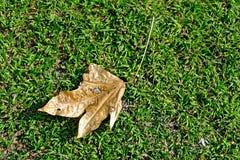 Foglia asciutta con le macchie sull'erba al sole fotografia stock