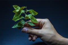Foglia asciutta con una mano che la pianta Immagini Stock Libere da Diritti