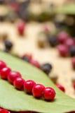 Foglia asciutta dell'alloro con il granello di pepe multicolore Immagine Stock