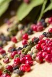 Foglia asciutta dell'alloro con il granello di pepe multicolore Fotografie Stock