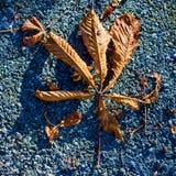 Foglia asciutta e gialla in autunno fotografia stock libera da diritti