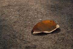 Foglia asciutta e la luce del sole Fotografia Stock Libera da Diritti