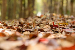 Foglia asciutta in foresta Fotografia Stock Libera da Diritti