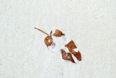 Foglia asciutta sulla spiaggia con la sabbia bianca Fotografia Stock Libera da Diritti