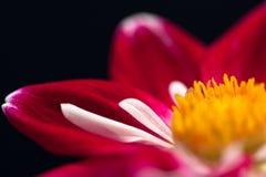 Foglia astratta del fiore Immagini Stock Libere da Diritti
