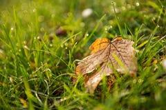 Foglia autonoma sul fondo dell'erba nel campo Fotografia Stock Libera da Diritti