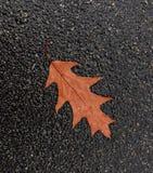 Foglia autunnale della quercia isolata su terra nera Fotografia Stock Libera da Diritti