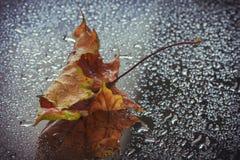 Foglia bagnata di autunno Immagini Stock