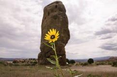 Foglia Balsamroot della freccia nel parco di stato di Kodachrome immagini stock libere da diritti