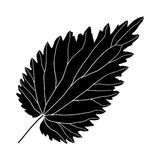 Foglia in bianco e nero dell'ortica Immagine Stock Libera da Diritti
